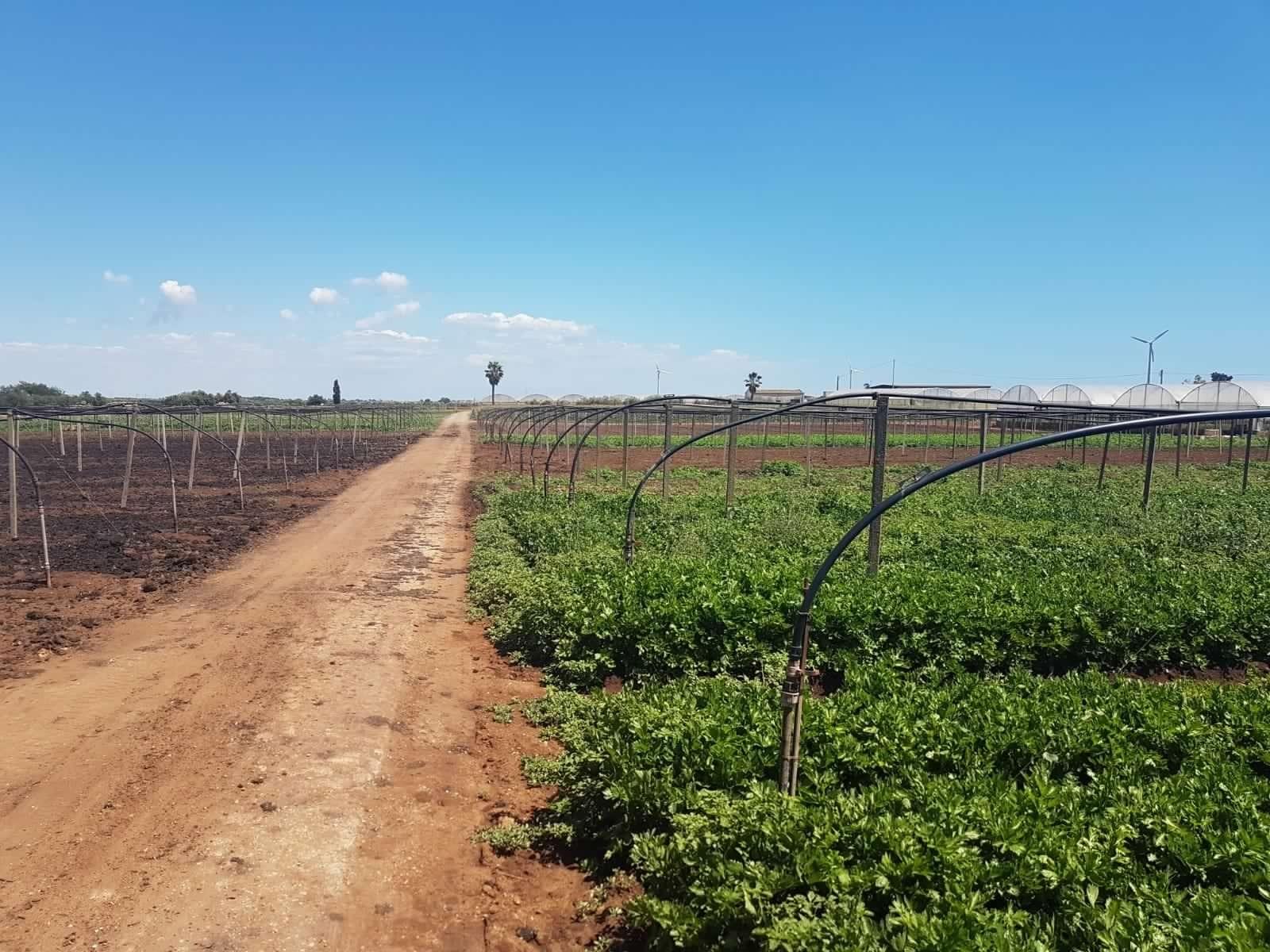 Agricoltura biologica: perché sceglierla.